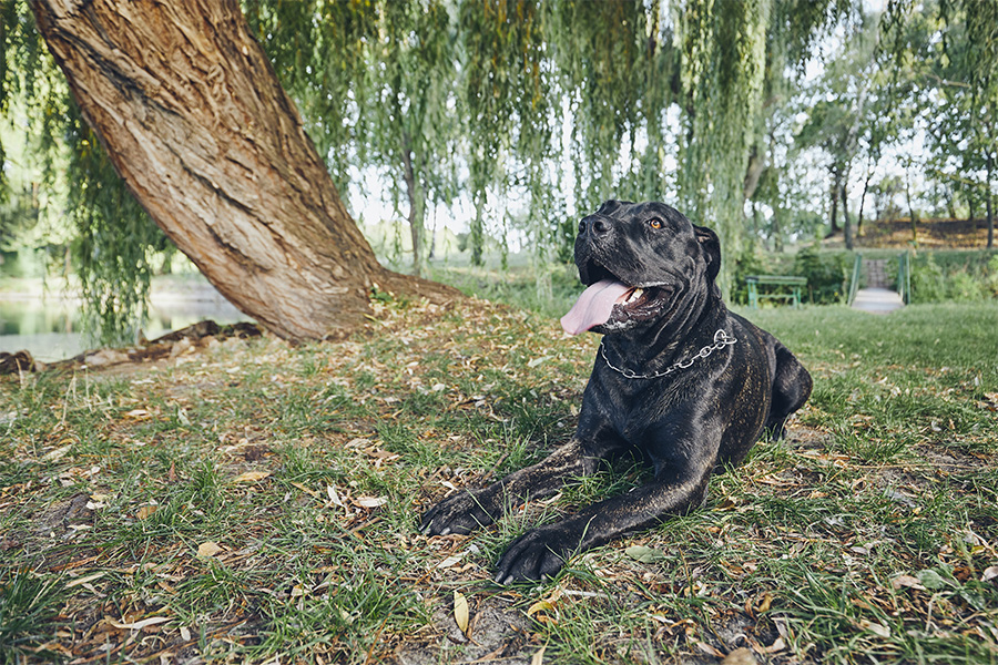 5 Best San Diego North County Dog Parks