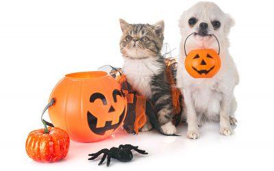 October 2018 Pet Halloween Events in San Diego