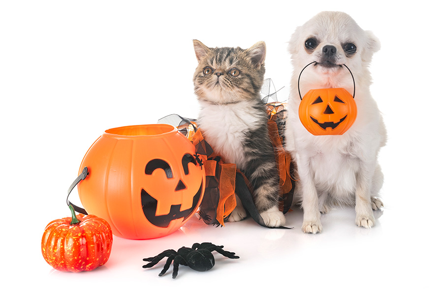 October 2018 Pet Halloween Events in San Diego