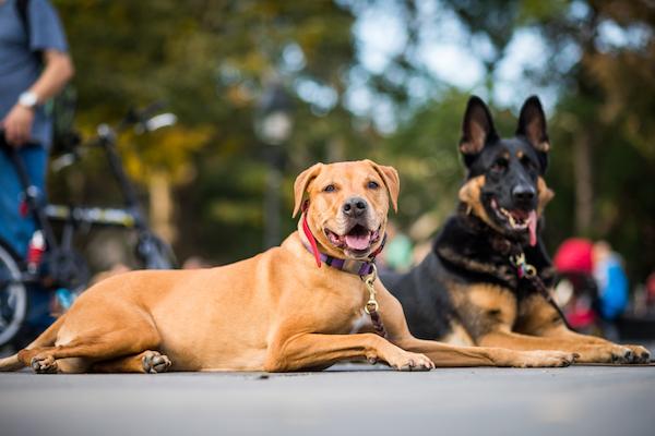 8 Dog Park Etiquette Tips