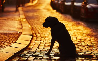 8 Tips To Help Find Your Missing Pet