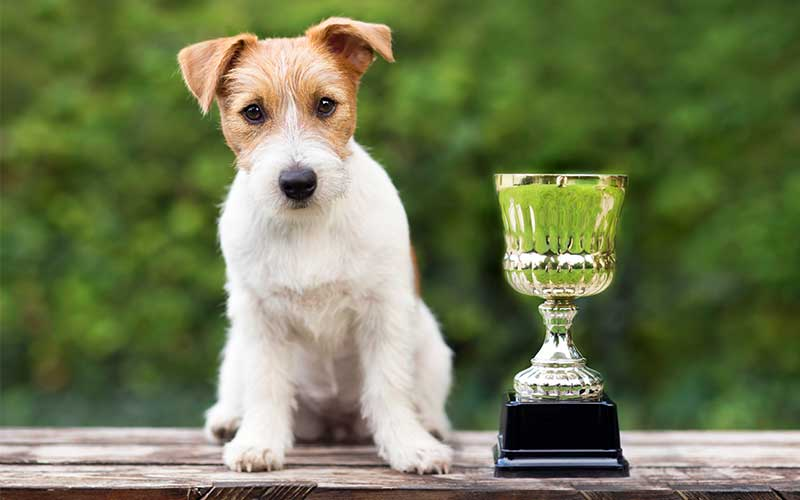 2019 Best Dog Walking Service – Ranch & Coast Magazine
